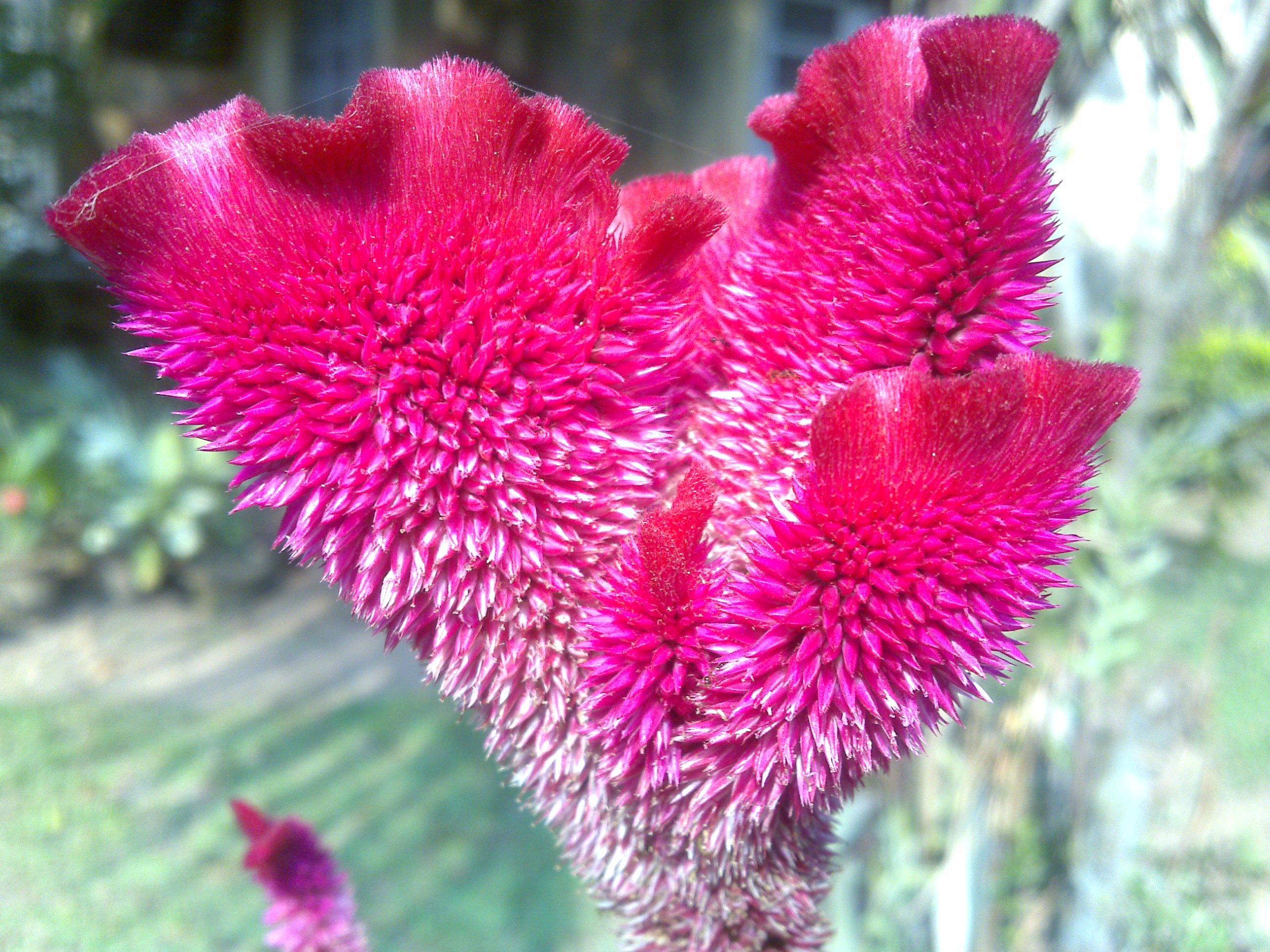 Todays Flowers 123 Terra Farmer