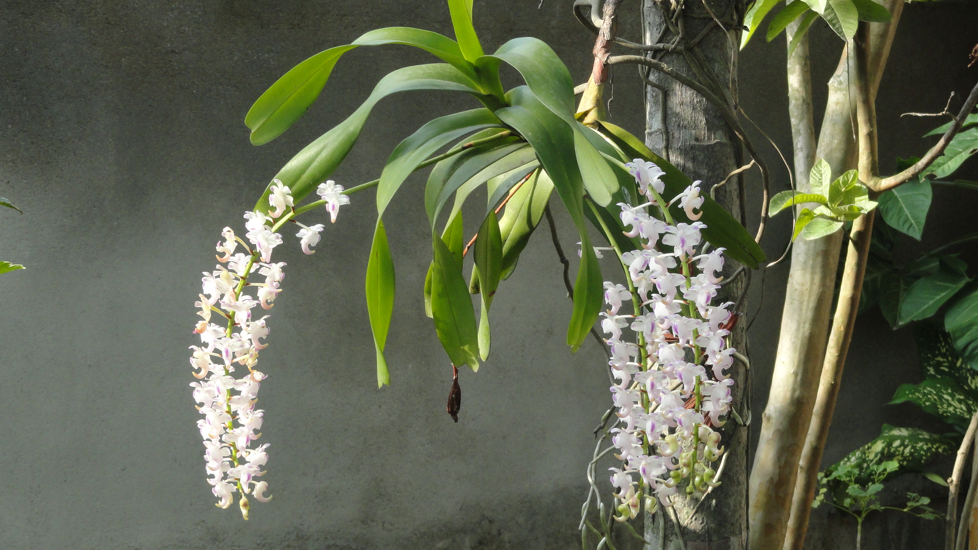 Orchid Species Identification